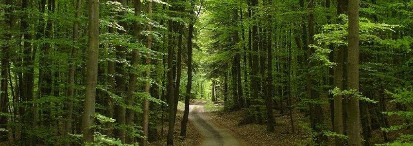 Foto bosco Monti Sicani